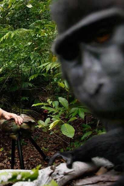 Como el mono tomó varias fotos cuando obtuvo la cámara, muchas salieron...