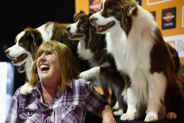 Los adorables perros realizan distintos tipos de 'performance'