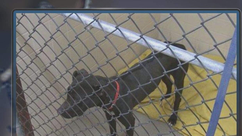 Ordenanza en Glendale para el cuidado de animales