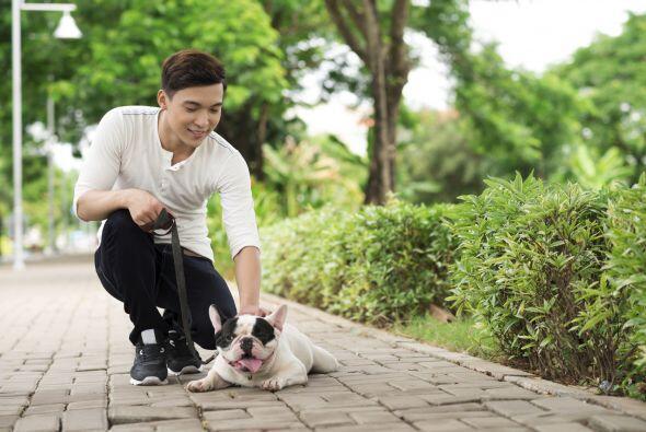 ¿Te sientes triste?, acaricia a un perro. Hacerlo aumentará tus neurotra...