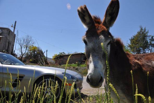 La carretera siempre ofrece sorpresas, pero en este caso, el burro parec...