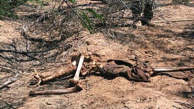 En fotos: Hallazgo de restos de inmigrantes por la organización Aguilas del Desierto