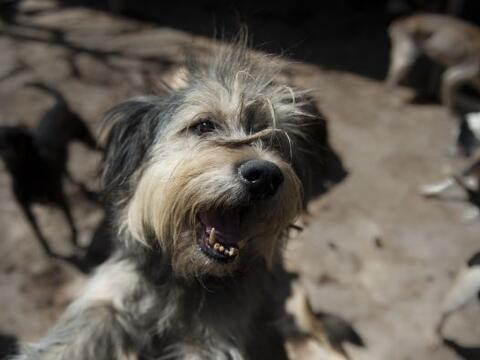 El creciente fenómeno del abandono de perros en la capital mexica...